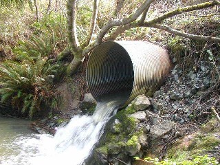 Undersized culvert at Anker Creek created sedimentation and served as a barrier to salmonids
